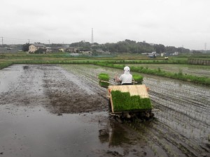 大竹農園田んぼ1